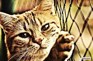Siatki do zabezpieczenia kota - siatka dla kota