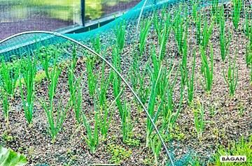 Siatki do uprawy warzyw i innych roślin