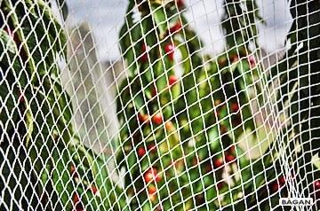 Siatki przeciw ptakom, zabezpieczenie przed ptakami