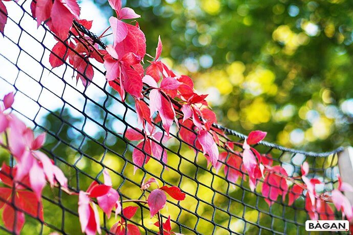 Siatka do bluszczu i innych roślin pnących