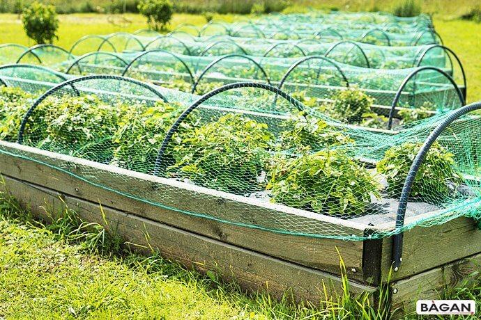 Siatki do uprawy w ogródku