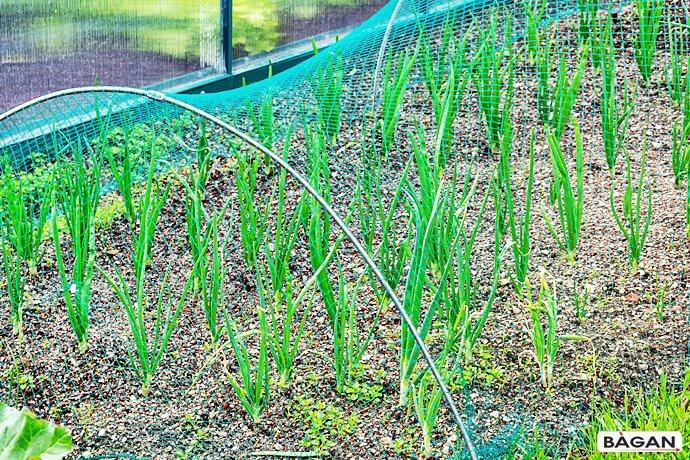 Siatka do ogródka na uprawę