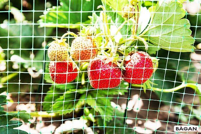 Siatki do ogródka pod uprawę