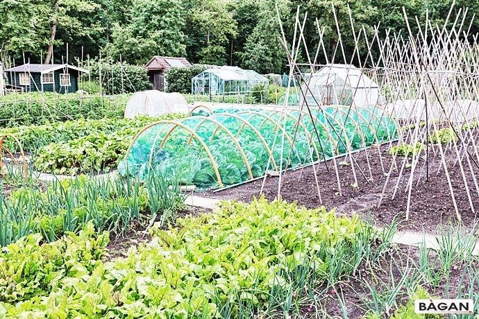 Ogrodzenie z siatki warzyw w ogródku